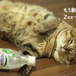 猫で爆笑!bokete(ボケて)の猫画像が傑作すぎる!