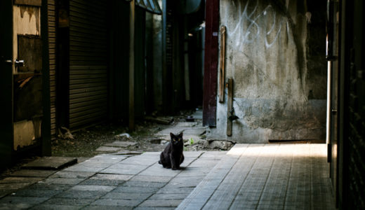 迷子ネコのポスター・チラシはプロに作ってもらうと注目度がアップ!