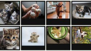 時間を忘れて猫の写真・動画をダラ見しちゃう!『ねこキャット』