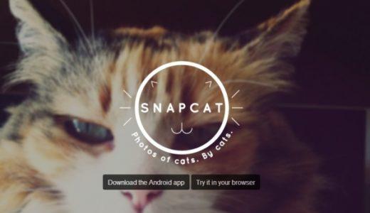ネコの自分撮りアプリ『Snapcat』でチャレンジしてみた結果