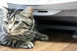 とにかくプリンターが気になる猫たちのかわいい動画