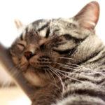 フリー写真素材サイトで『猫の写真』がどれくらいあるか調べてみた