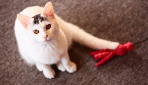 猫をもっとかわいく撮りたい!プロ・猫写真家が教える上手な撮り方参考サイト