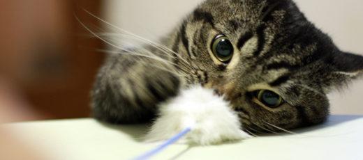 ネコの基本攻撃技『猫パンチ』をぐぐってみた結果【動画あり】