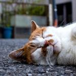 夢に『猫』が出てきたらどんな意味があるの?【夢占い・夢診断】