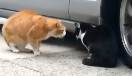 アイーン!志村声の猫動画+他の動物も