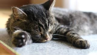 ひんやり!猫の暑さ対策に御影石タイルをペット用クールベットとして置いてみた