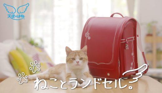 人気モデル猫がランドセルを紹介する動画が何気に癒される