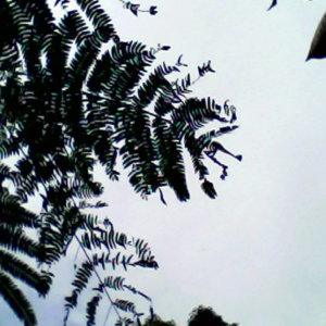 pieniで撮った写真5