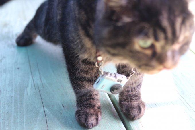 次の撮影ポイントに移動する猫カメラマン